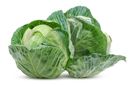 cabbage vegetable isolated on white background 免版税图像