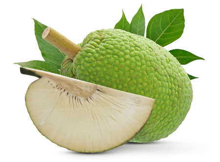 Breadfruit isolated cut out on white background