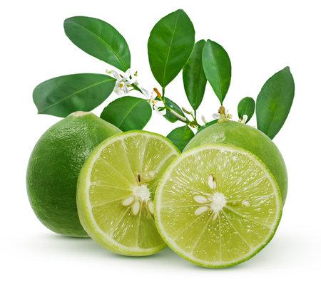 Lime fruit isolated on white background 免版税图像
