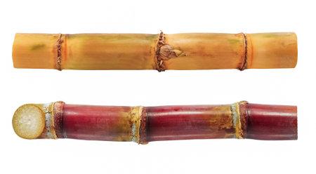 sugar cane isolated on white background 免版税图像