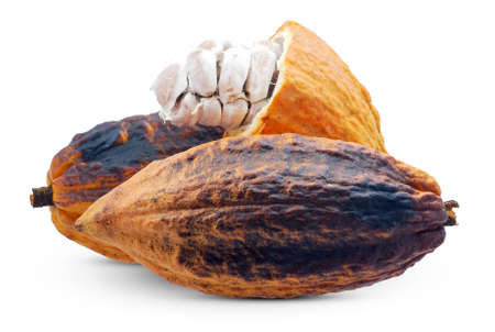 Cocoa or cacao fruit isolated on white background