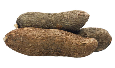 Single object of Cassava isolated on white background