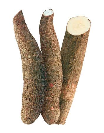 cassava isolated on white background 免版税图像