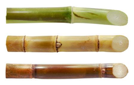 Sugarcane isolated on white background