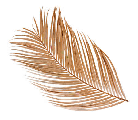 Tropical dry palm leaf isolated on white background 免版税图像