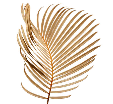 Tropical palm leaf isolated on whit background