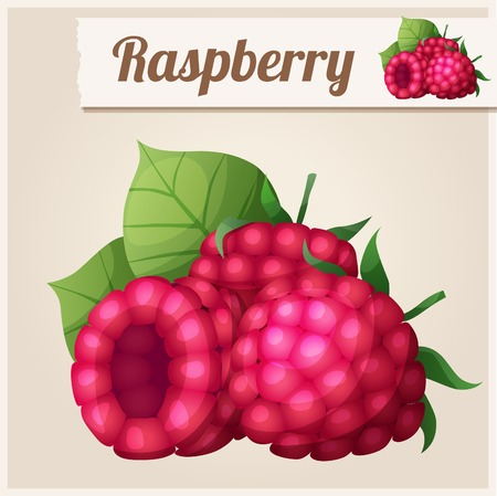food illustration: Detailed Icon. Raspberry.