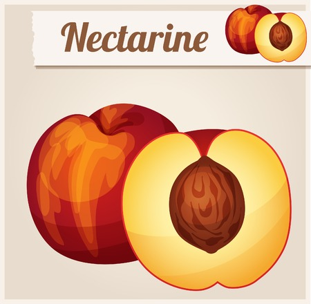 raw food: Nectarine.  Detailed Vector Icon