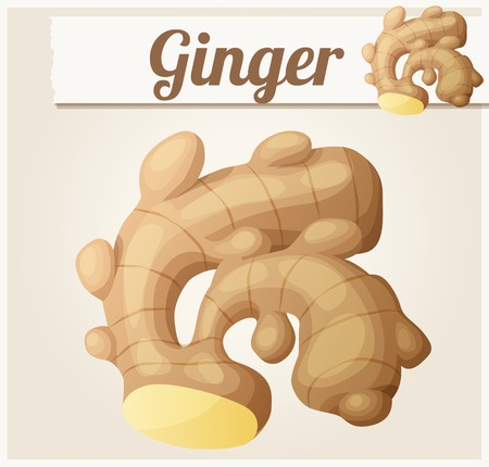 gourmet food: Ginger. Detailed Vector Icon. Series of food and drink and ingredients for cooking.