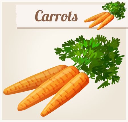carrot: Carrots. Detailed Vector Icon. Series of food and drink and ingredients for cooking. Illustration