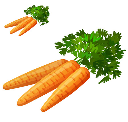 root vegetables: Carrots isolated on white background. Detailed Vector Icon. Series of food and drink and ingredients for cooking. Illustration