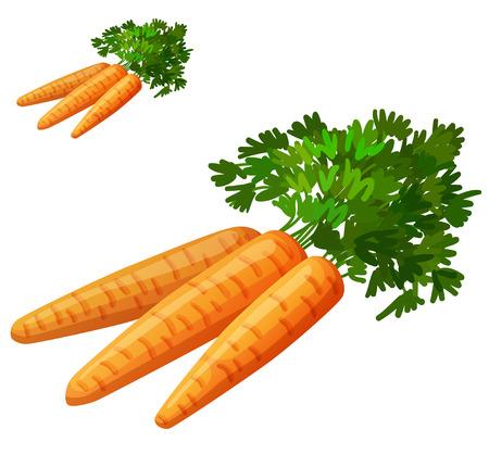 ?  ? carrot: Las zanahorias aisladas sobre fondo blanco. Icono del vector detallada. Serie de alimentos y bebidas y los ingredientes para cocinar.