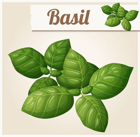 basil: Basil leaves. Detailed Vector Icon. Series of food and drink and ingredients for cooking.