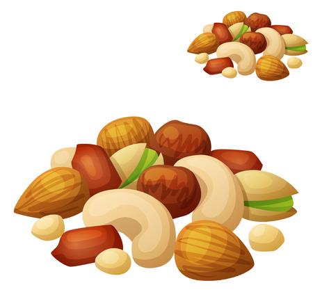 pinoli: Frutta a guscio isolato su sfondo bianco. Cartoon icona del vettore. Serie di cibi e bevande e ingredienti per cucinare.