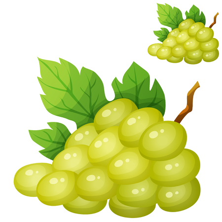 white grape: White grape. Cartoon icon isolated on white background. Series of food and drink and ingredients for cooking.