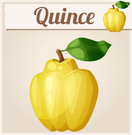 quince: Quince fruit. Cartoon icon. Series of food and drink and ingredients for cooking.