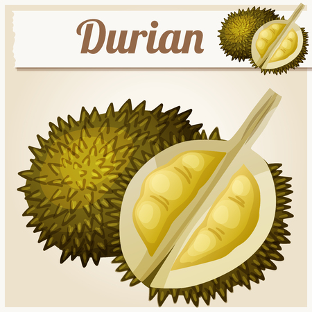 Durian fruit. Cartoon vector icon. Series of food and drink and ingredients for cooking. 矢量图像