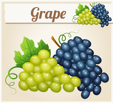 bunches: White and blue grape bunches. Cartoon icon. Series of food and drink and ingredients for cooking. Illustration