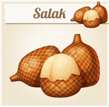 icon series: Salak fruit. Cartoon vector Icon. Series of food and drink and ingredients for cooking.