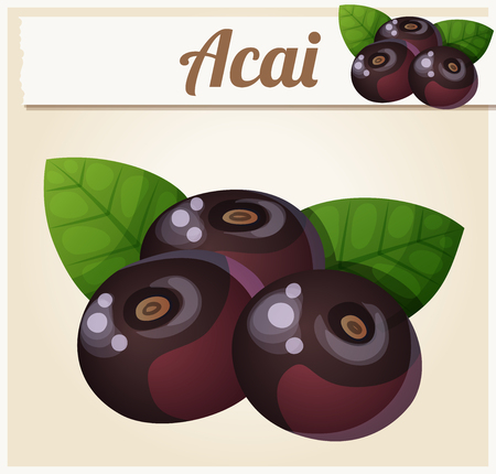 Acai berries illustration. Cartoon vector icon. Series of food and drink and ingredients for cooking. Illustration