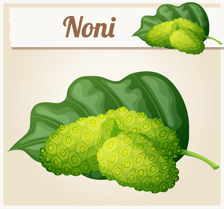 morinda: Noni fruit illustration. Cartoon vector icon. Series of food and ingredients for cooking.