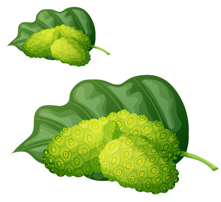 morinda: Noni fruit illustration. Cartoon vector icon isolated on white background. Series of food and ingredients for cooking. Illustration
