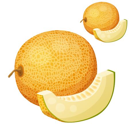 Riped メロン果実のイラスト。