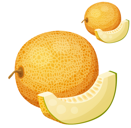 Riped melon fruit illustration.