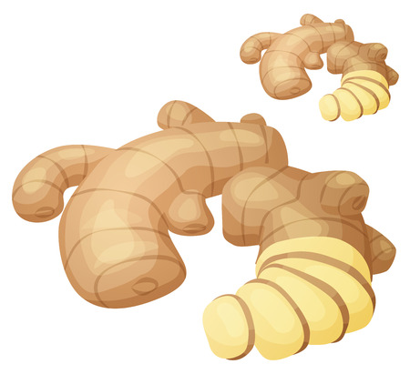 Ginger root illustration. Vector icon isolated Stock Photo