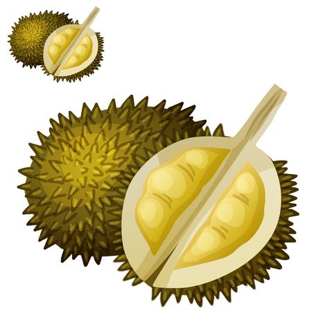 Durian fruit. Cartoon vector icon isolated