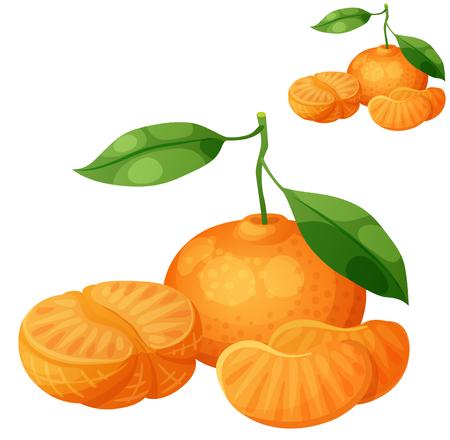 Tangerine fruit (Mandarin). Cartoon vector icon