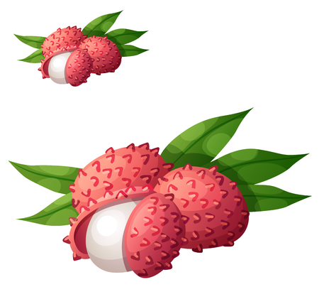 Lychee fruit. Cartoon vector icon isolated on white background. Series of food and drink and ingredients for cooking.