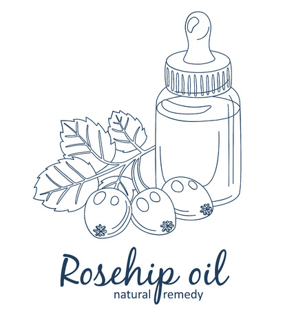 Rosehip oil and berries in bottle illustration. Essential oil cartoon vector icon. Black line art isolated on white background Vektorgrafik