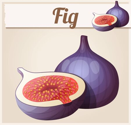 Fig fruit. Cartoon icon. Series of food and drink and ingredients for cooking Stock fotó