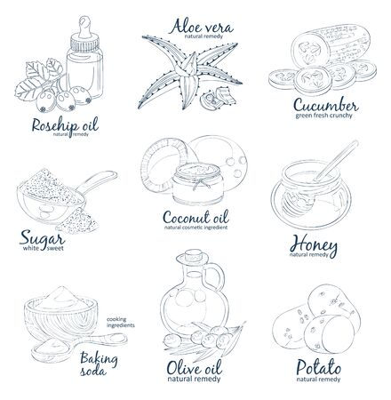 Facial mask ingredients for home face skin care. 矢量图像