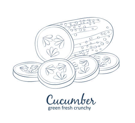 Cucumber. Cartoon vector food black and white icons. Hand drawn linear natural cosmetic illustration 矢量图像