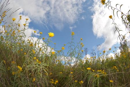 구름과 푸른 하늘을 프레임에 야생화