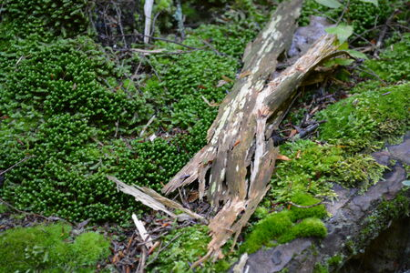 moss and bark background Stock Photo
