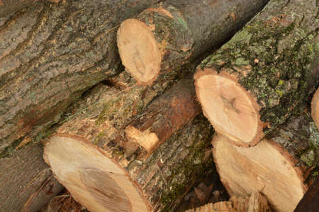 cut logs Stock Photo