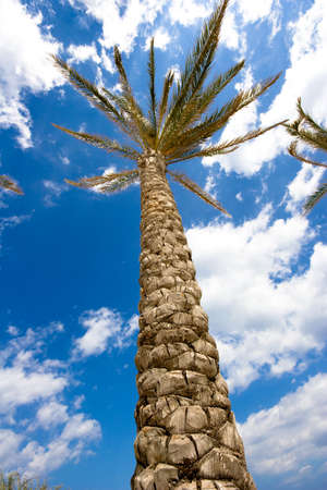 high palm tree photo