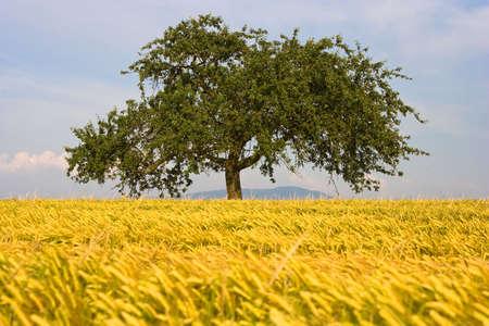 tree in field photo