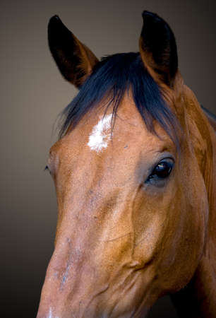 horse head portrait Stock Photo