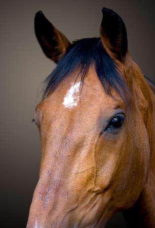 light brown horse: horse head portrait Stock Photo