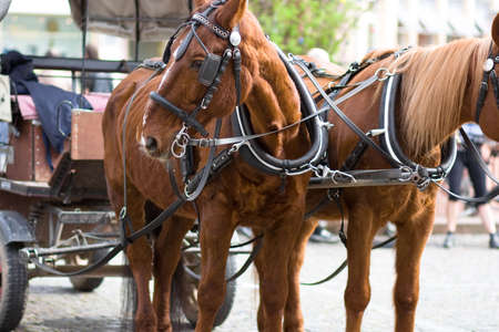 horse cart Banco de Imagens - 2784170