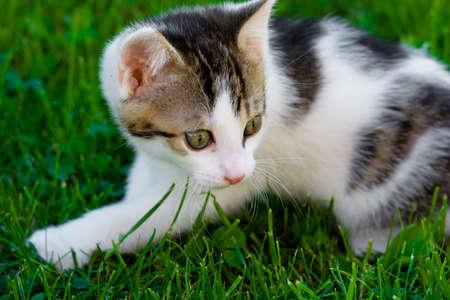 Little Kitten in the green gras photo