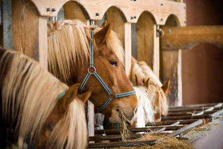 many horses in a row eating at the stables photo