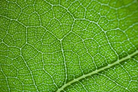 green fresh leaf details macro