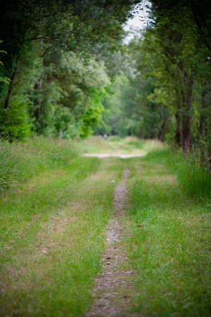 straight path: A beautiful straight path in a green environment Stock Photo