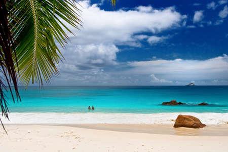 beach palm: Anse Lanzio beach at Seychelles