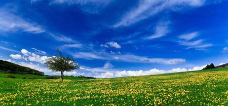 Spring landscape - green fields, the blue sky Stock Photo